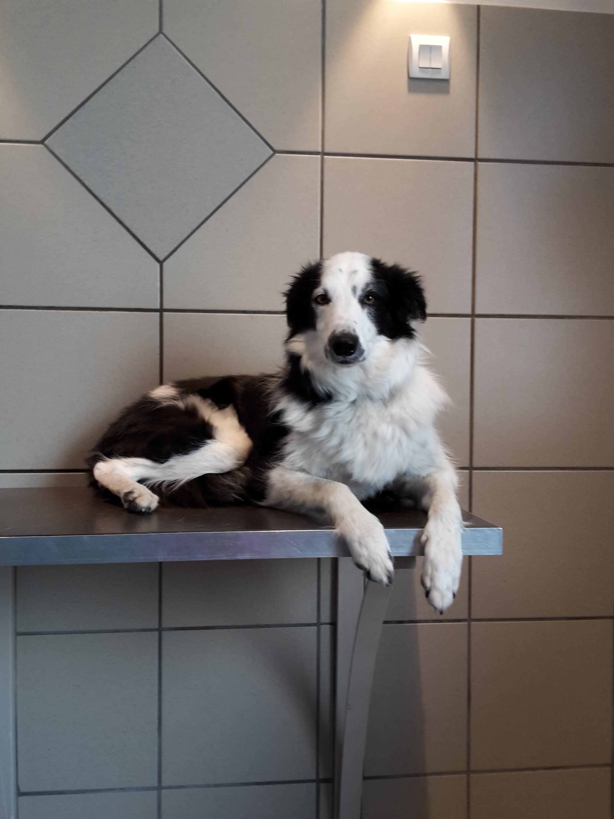 services clinique veterinaire du rond point voiron. Black Bedroom Furniture Sets. Home Design Ideas