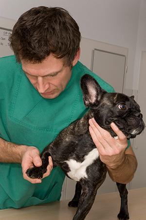 les m tiers au contact des animaux partie 1a les m tiers de soins aux animaux domaine. Black Bedroom Furniture Sets. Home Design Ideas