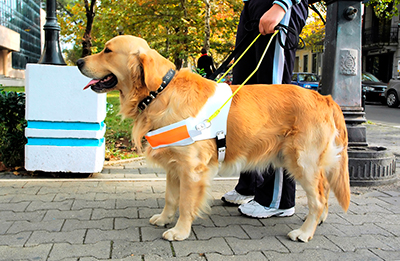 dressage chien aveugle