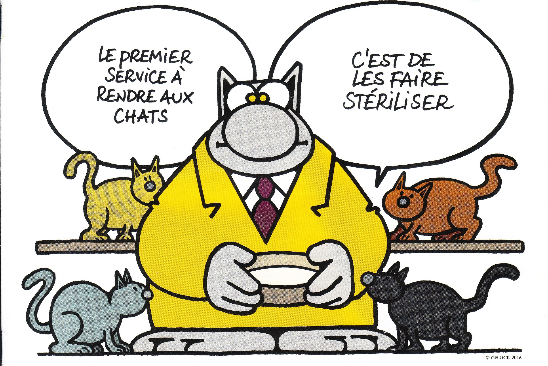 Le Chat Vole Au Secours Des Chats Dr Morgane Collin